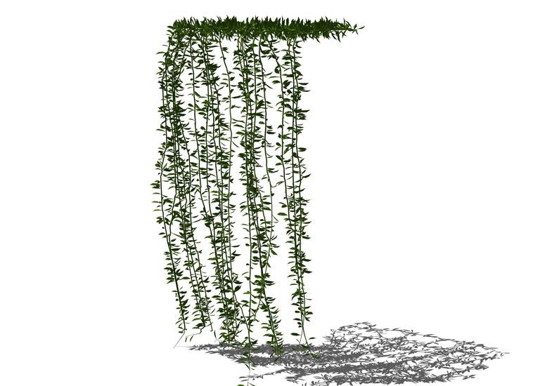 藤蔓爬墙植物SU模型