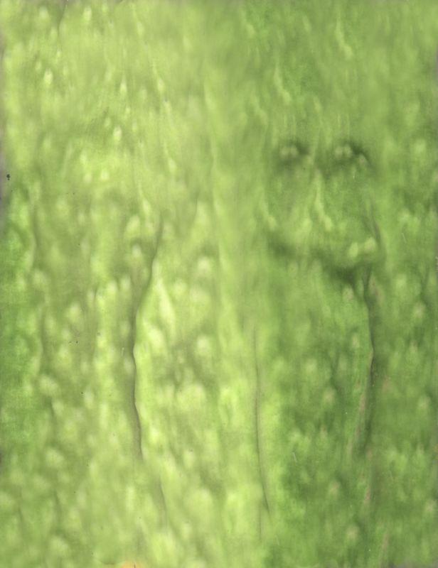 其他杂项-植物纹理 021