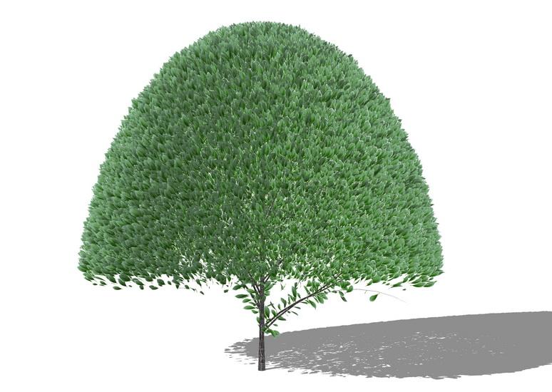 3D灌木SU模型