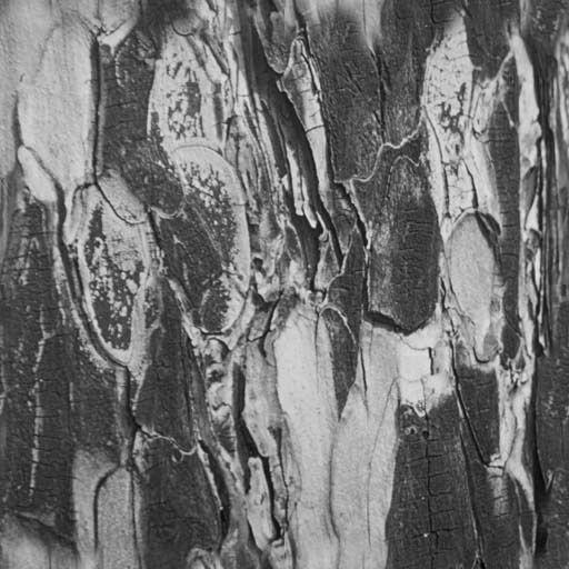 木纹木材-树皮 134