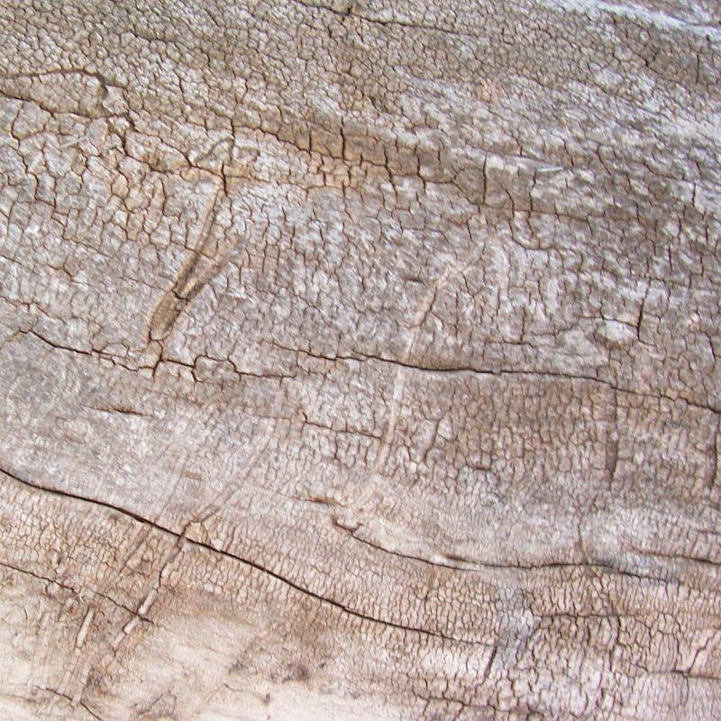木纹木材-树皮 163