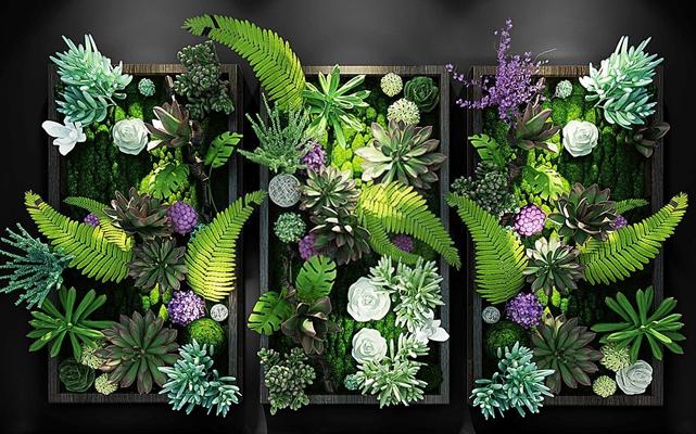现代多肉植物艺术画框墙组合 现代挂画 墙饰 绿植 多肉植物 艺术画框