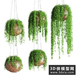 吊籃植物模型下載