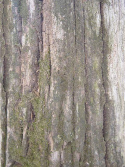 木纹木材-树皮 099
