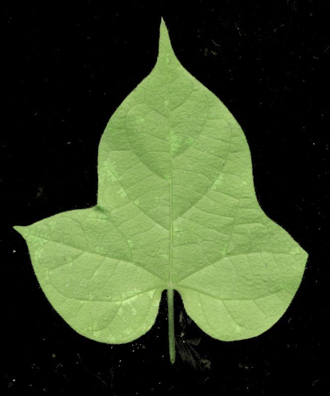 其他杂项-植物纹理 047