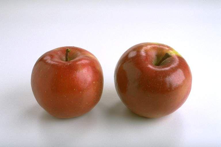 其他杂项-水果贴图 002