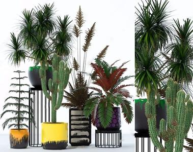 绿植 新中式盆栽盆景 绿植 仙人掌
