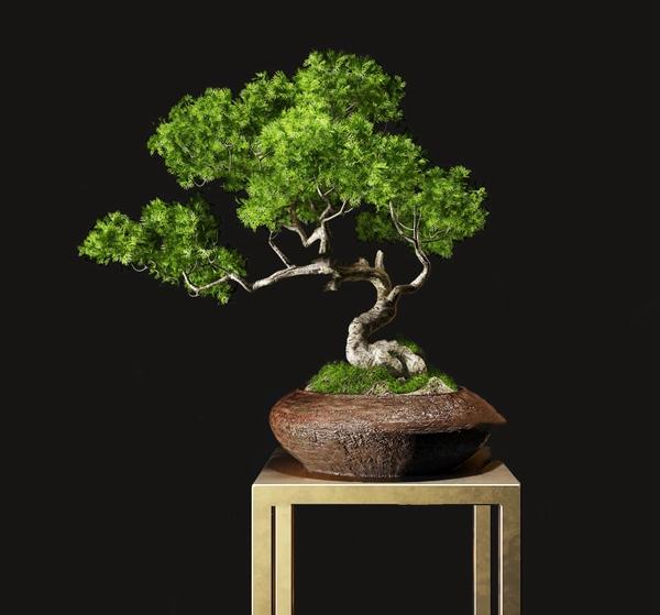 新中式松树盆栽3d模型