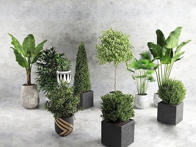 植物组合 现代盆栽盆景 植物 吊兰