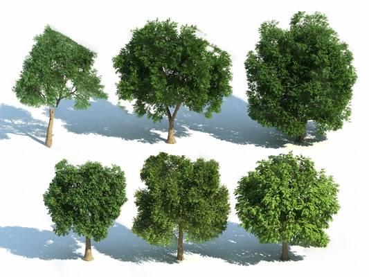 现代树3D模型