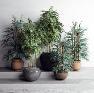 植物凤尾竹组合 现代盆栽盆景 植物 凤尾竹 绿植 摆件