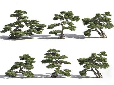 现代罗汉松景观树3d模型