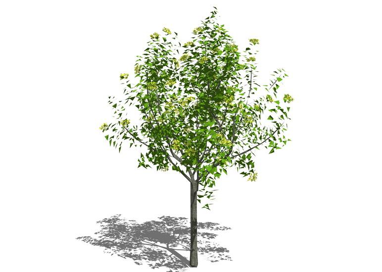 3D植物树SU模型