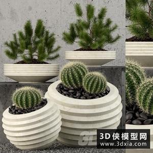 仙人球植物模型