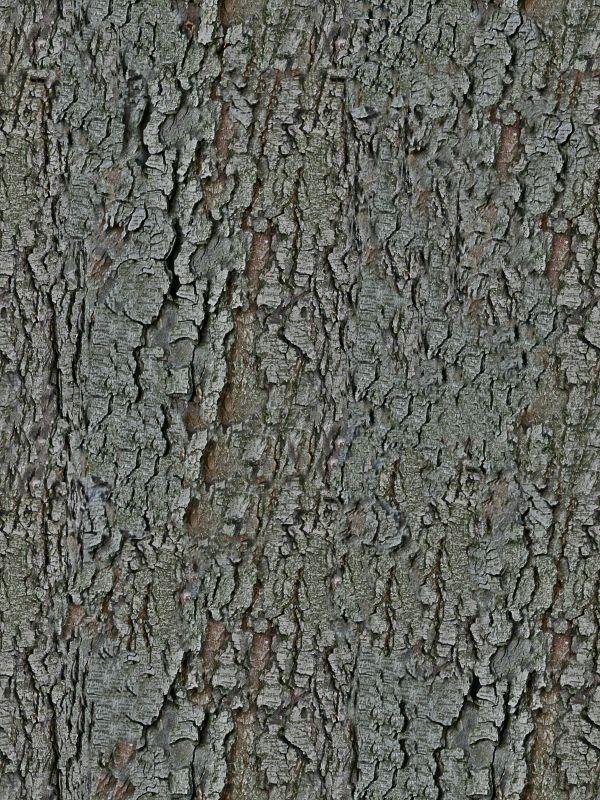 木纹木材-树皮 068