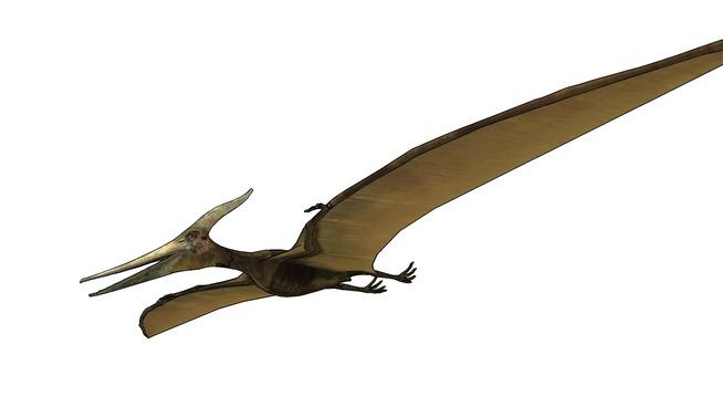 翼龙 小刀 起重机 信天翁 鸢 羽毛笔