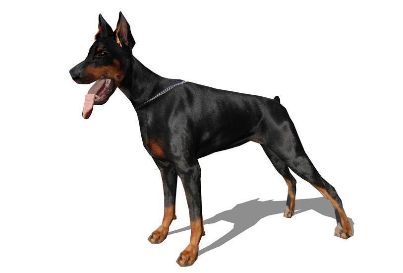狗SU模型