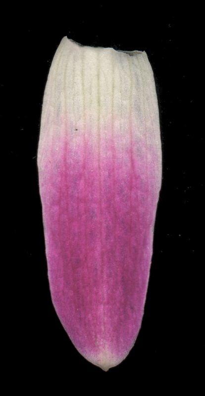 其他杂项-植物纹理 019
