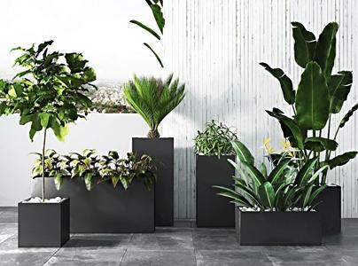 现代绿植盆景组合 现代盆栽盆景 绿植