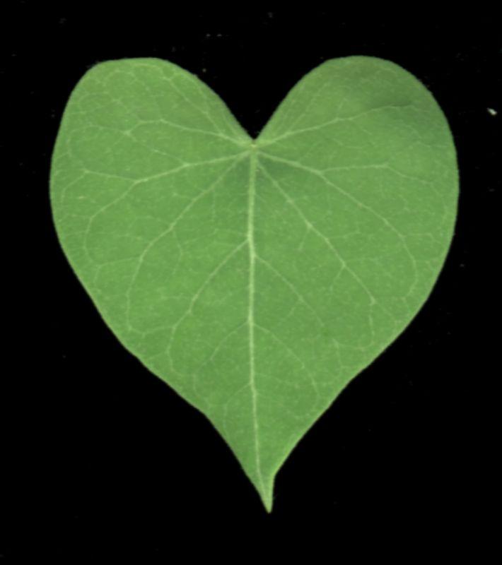 其他杂项-植物纹理 069