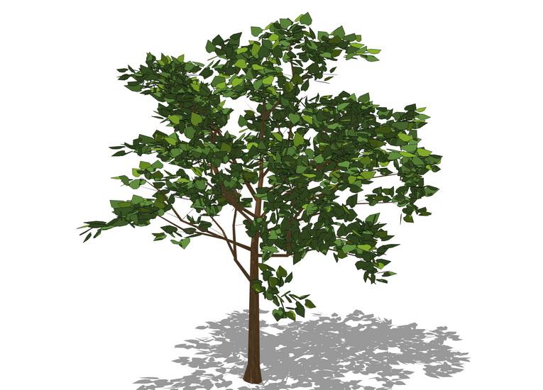3D植物樹SU模型