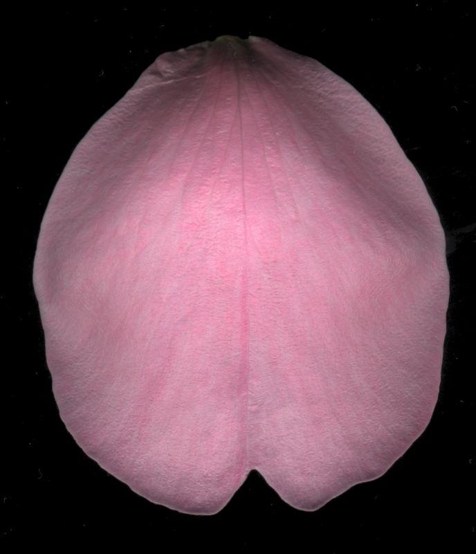 其他杂项-植物纹理 072