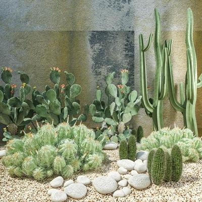 庭院沙漠植物组合 绿植 仙人掌 鹅卵石 绿植 仙人掌 鹅卵石