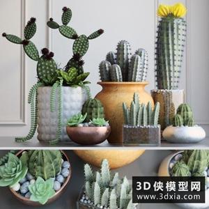 仙人掌植物模型组合