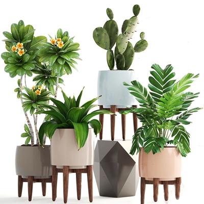 北欧绿植 北欧绿植 仙人掌 花卉 植物 摆件 装饰品