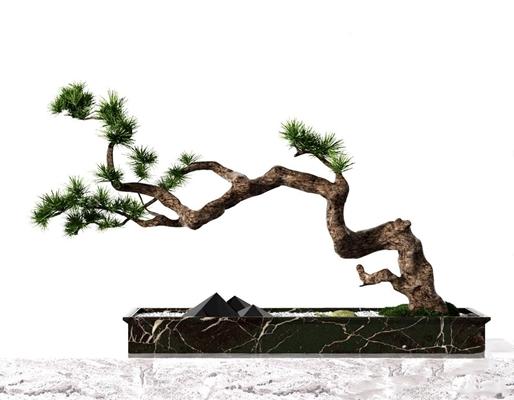 中式松树盆景 中式松树盆景