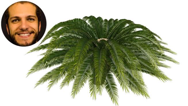 cycca西米苏铁棕榈开放论坛 植物 画 其他 美女 海胆
