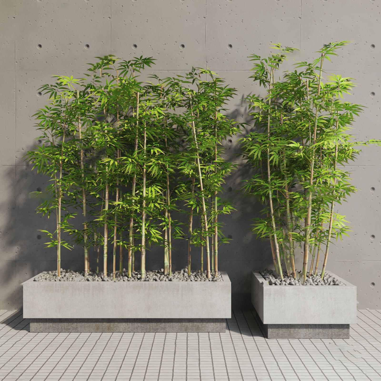 现代竹子盆栽3d模型