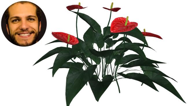 红掌蚁 画 其他 植物 蜂鸟 花