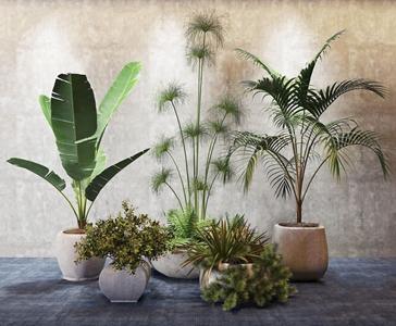 现代植物组合 现代盆栽盆景 植物 花盆