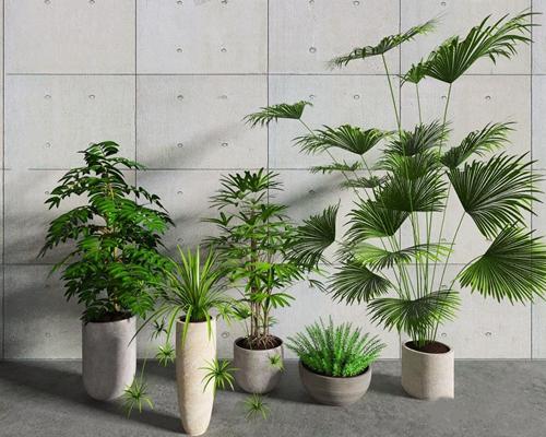 植物 北欧绿植 植物 盆栽