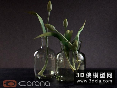 现代装饰植物