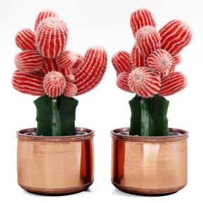 现代红色仙人掌组合3D模型