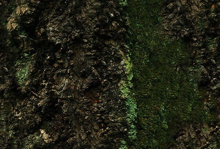 其他杂项-植物纹理 059