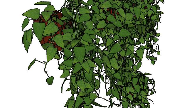 挂在墙上的花盆 植物 地图 棉花 花盆 其他