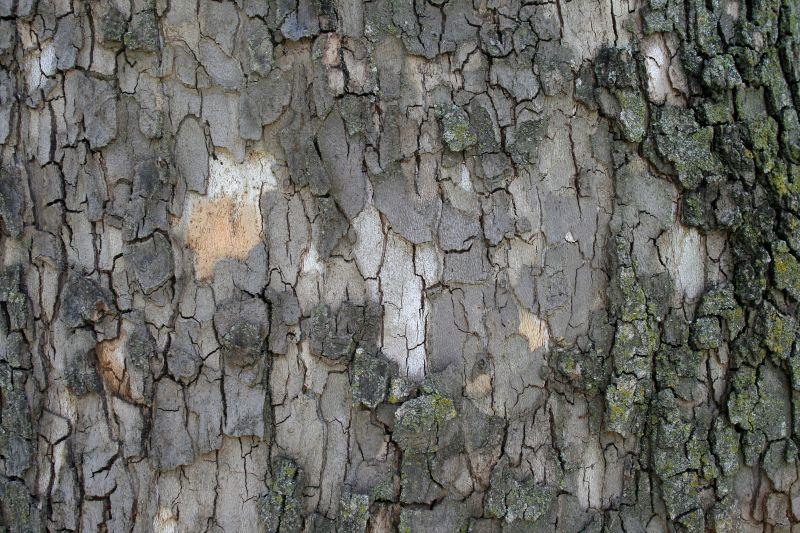 木纹木材-树皮 175