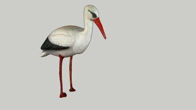 斯托奇 白鹳 红脚鹬 火烈鸟 黑鹳 琵鹭