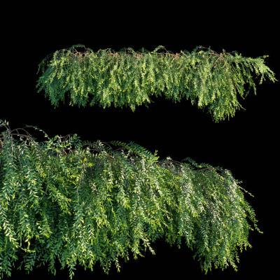 现代绿植 藤蔓