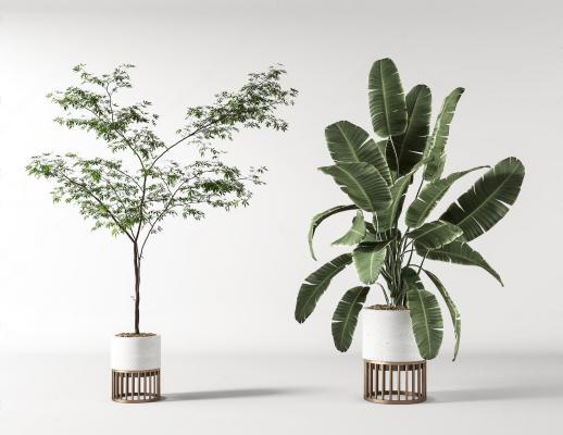 �F代盆栽 植物�M合