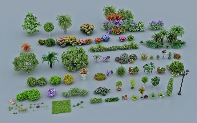 现代植物 户外花坛