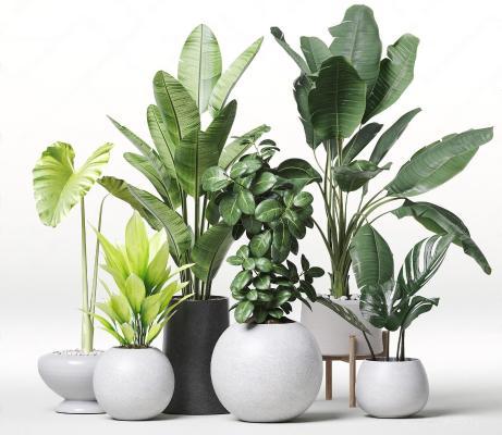 �F代植物 盆栽 �[件
