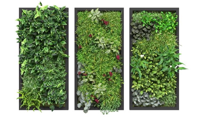 �F代�G∑植�� �G植�� 植物��