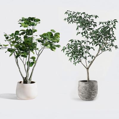 �F代盆栽 植物
