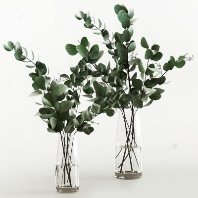 现代水生绿植