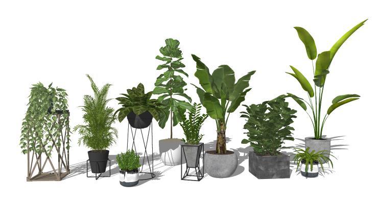 现代风格盆栽 户外植物盆栽 芭蕉树