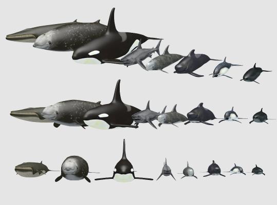 现代水生动物 海豚 鲨鱼 鲸鱼